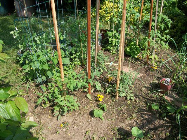 Front Yard Garden 1