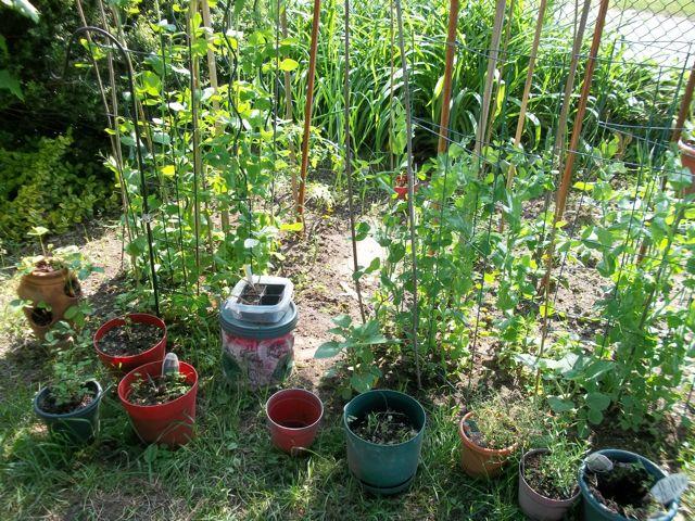 Front Yard Garden 2